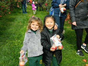 Preschool apple picking